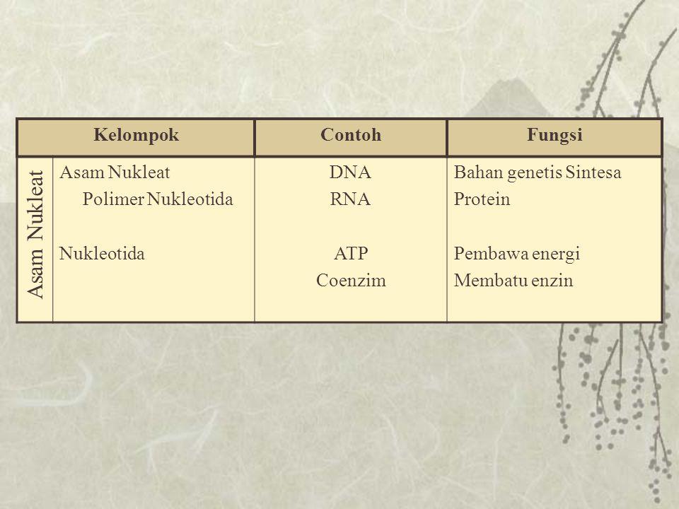 Asam Nukleat Kelompok Contoh Fungsi Asam Nukleat Polimer Nukleotida