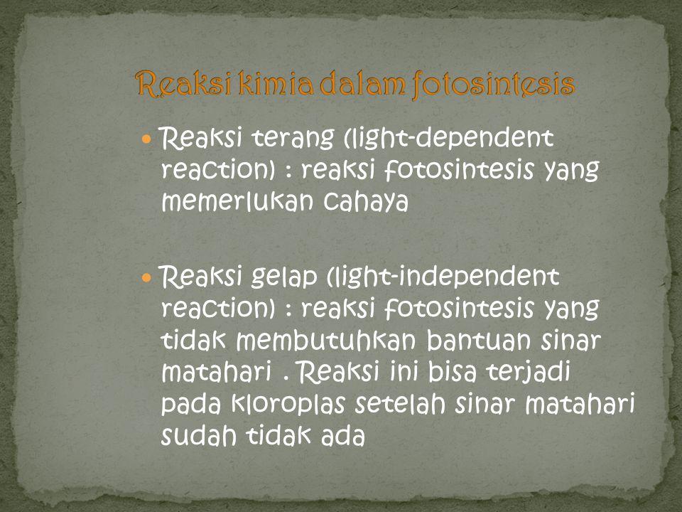 Reaksi kimia dalam fotosintesis