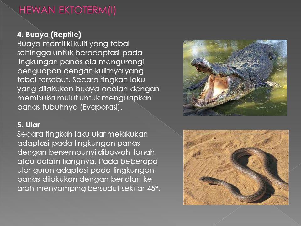 HEWAN EKTOTERM(I)