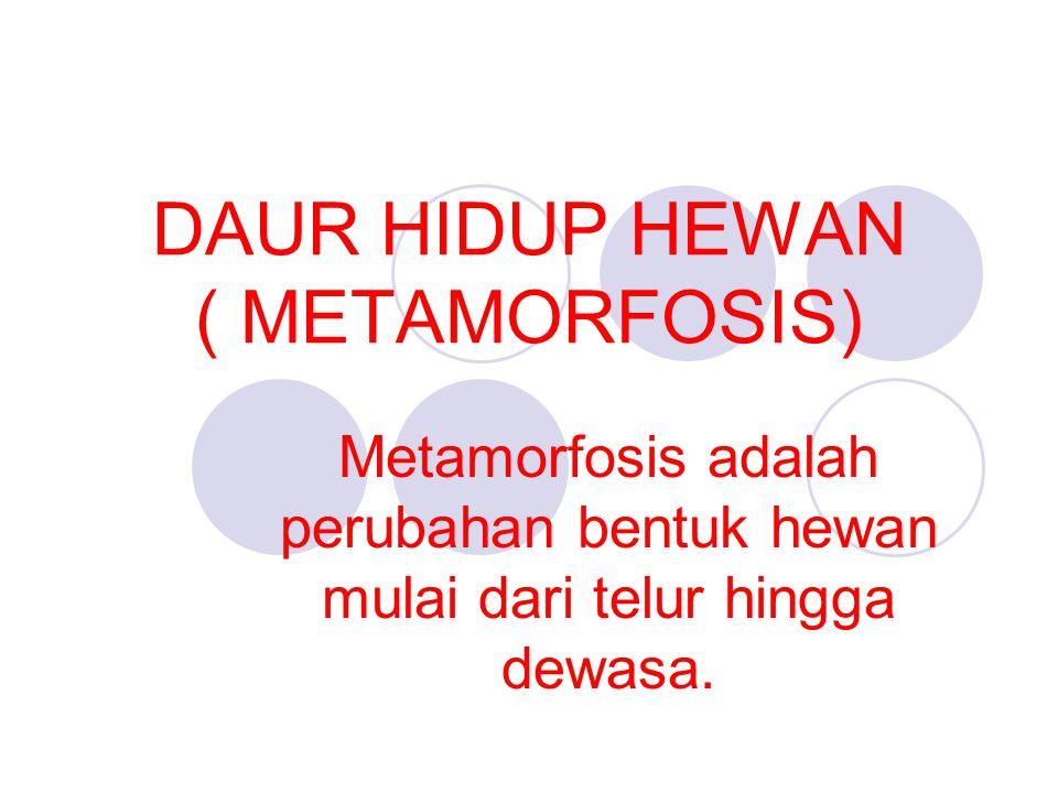 DAUR HIDUP HEWAN ( METAMORFOSIS)