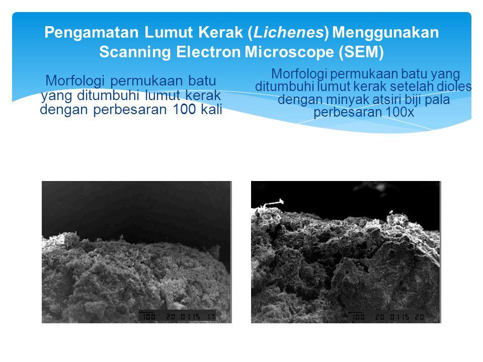 Pengamatan Lumut Kerak (Lichenes) Menggunakan Scanning Electron Microscope (SEM)