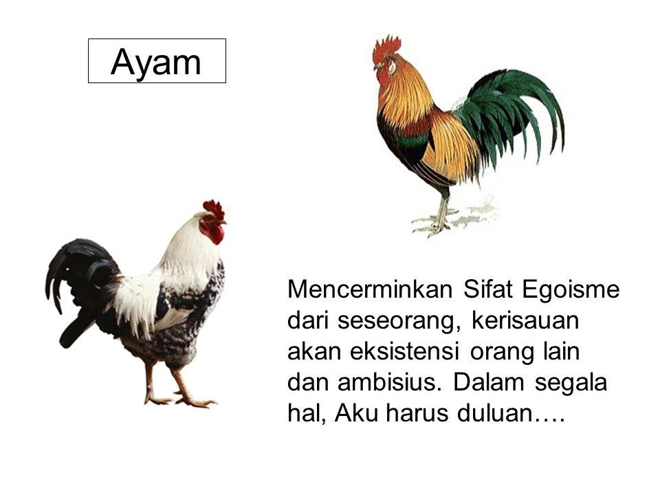 Ayam Mencerminkan Sifat Egoisme dari seseorang, kerisauan akan eksistensi orang lain dan ambisius.