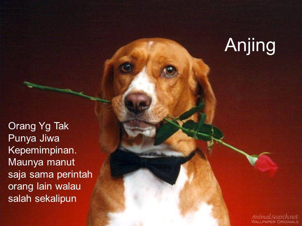 Anjing Orang Yg Tak Punya Jiwa Kepemimpinan.