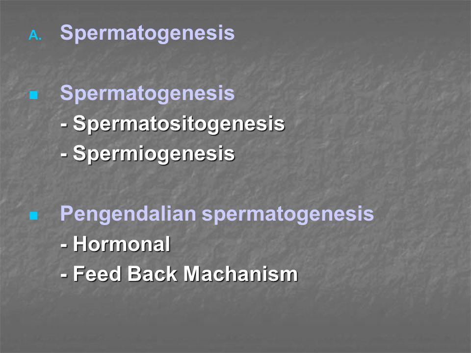 Spermatogenesis - Spermatositogenesis. - Spermiogenesis. Pengendalian spermatogenesis. - Hormonal.
