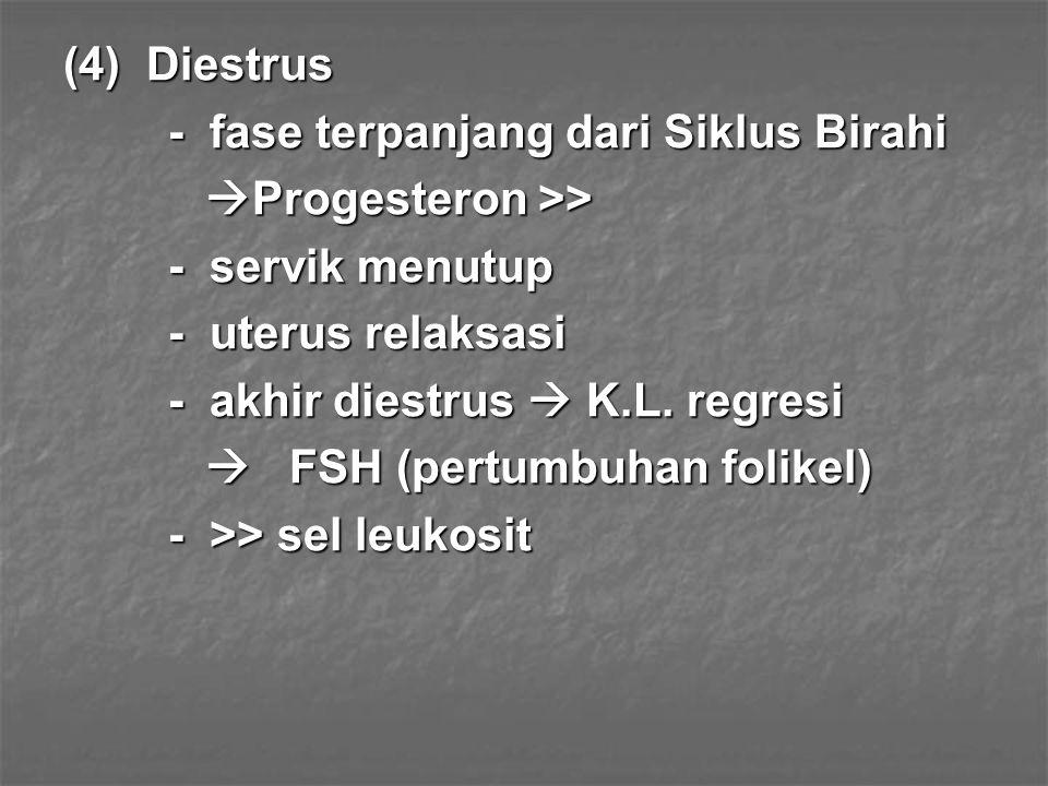 (4) Diestrus - fase terpanjang dari Siklus Birahi. Progesteron >> - servik menutup. - uterus relaksasi.