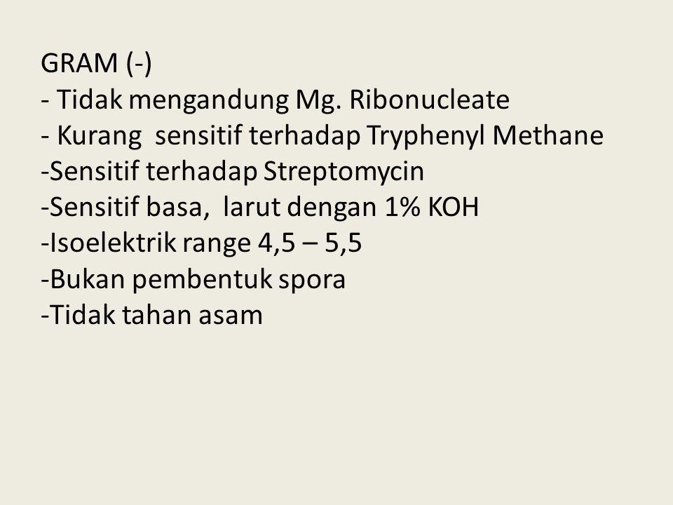 GRAM (-) - Tidak mengandung Mg