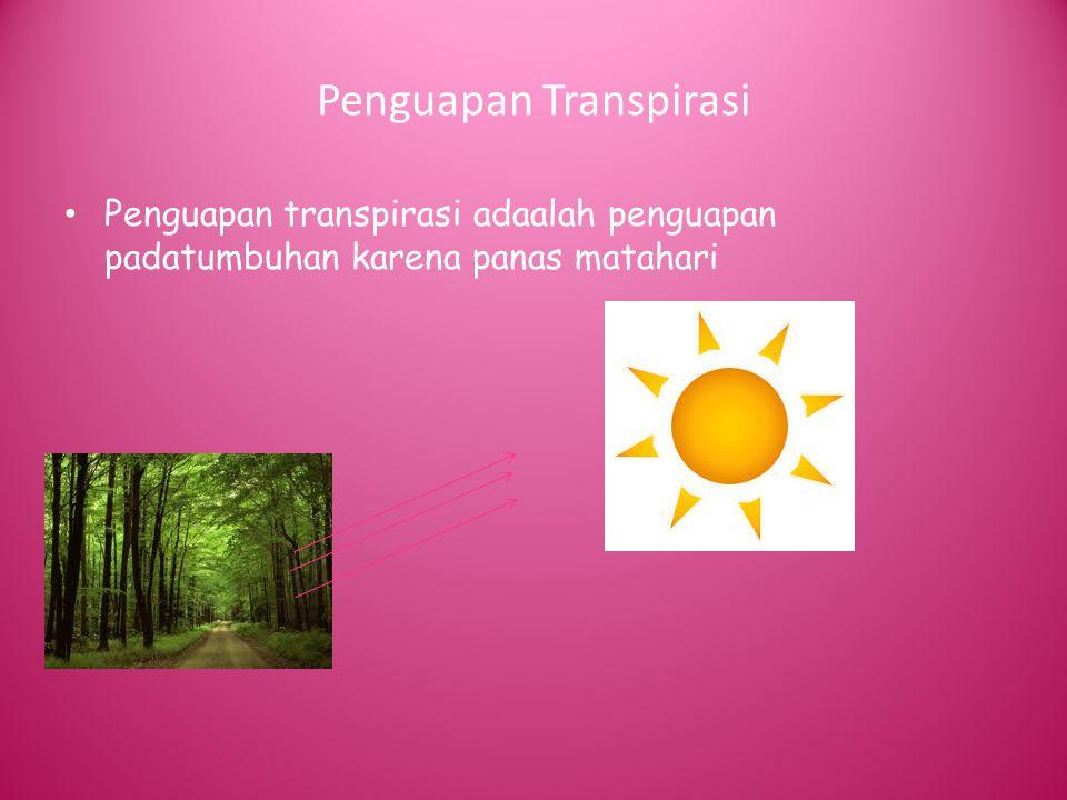 Penguapan Transpirasi