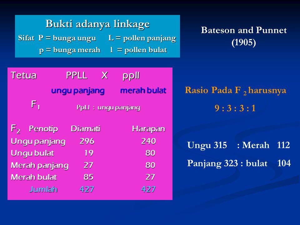 Bukti adanya linkage Bateson and Punnet (1905) Tetua PPLL X ppll