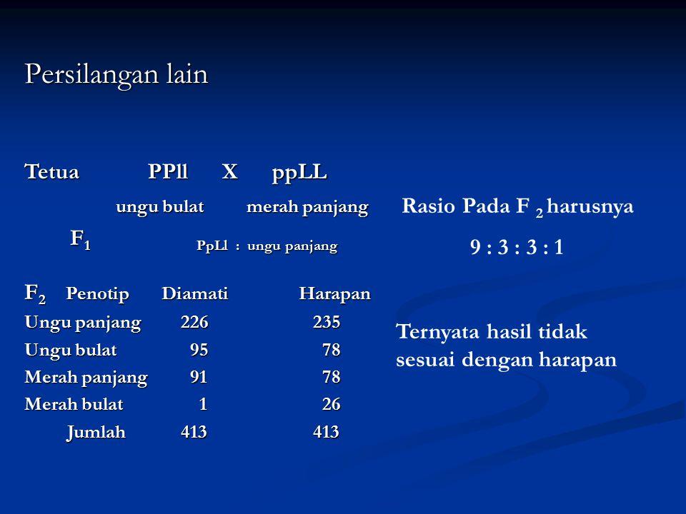 Persilangan lain Tetua PPll X ppLL ungu bulat merah panjang