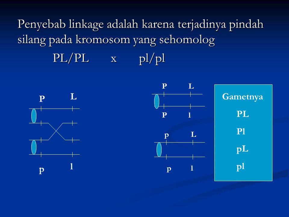 Penyebab linkage adalah karena terjadinya pindah silang pada kromosom yang sehomolog