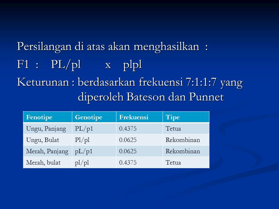Persilangan di atas akan menghasilkan : F1 : PL/pl x plpl Keturunan : berdasarkan frekuensi 7:1:1:7 yang diperoleh Bateson dan Punnet