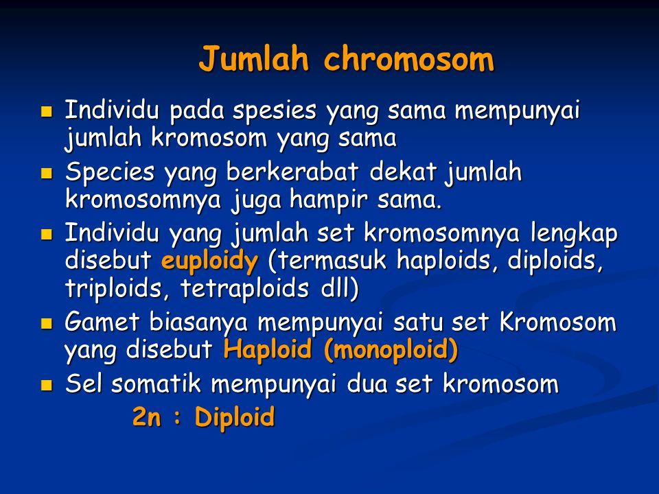 Jumlah chromosom Individu pada spesies yang sama mempunyai jumlah kromosom yang sama.