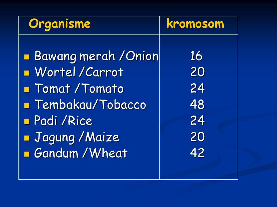 Organisme kromosom Bawang merah /Onion 16. Wortel /Carrot 20. Tomat /Tomato 24. Tembakau/Tobacco 48.
