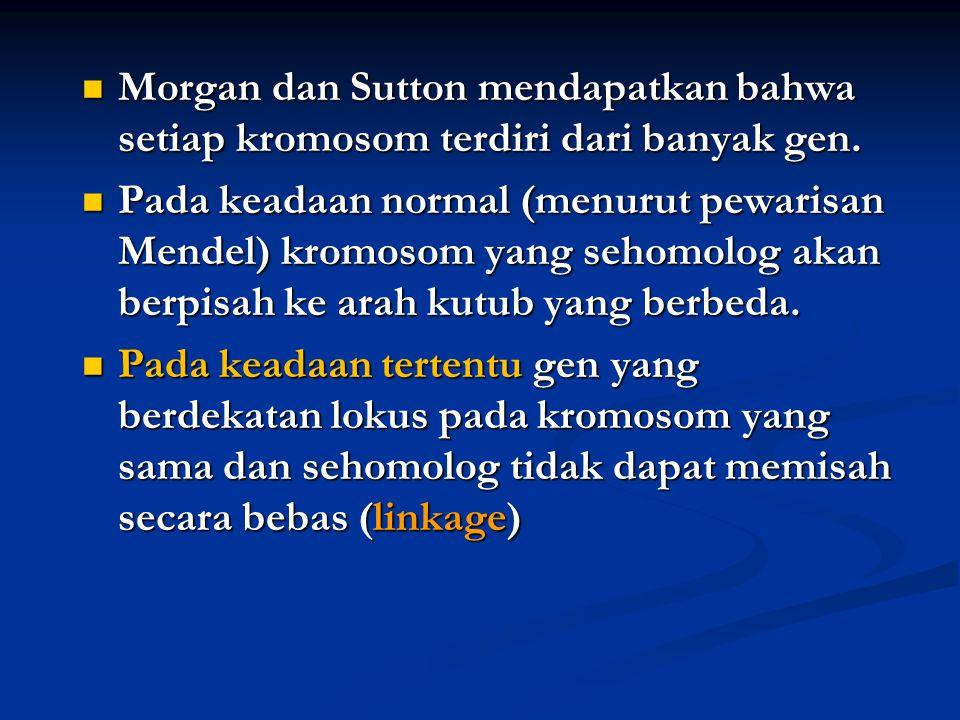 Morgan dan Sutton mendapatkan bahwa setiap kromosom terdiri dari banyak gen.