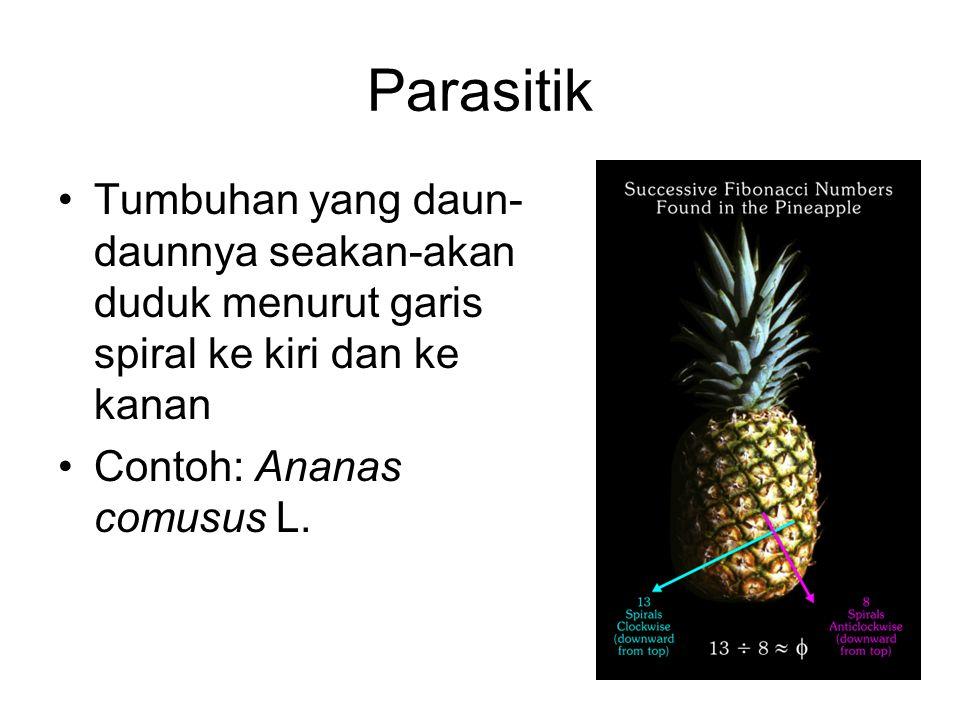 Parasitik Tumbuhan yang daun-daunnya seakan-akan duduk menurut garis spiral ke kiri dan ke kanan.