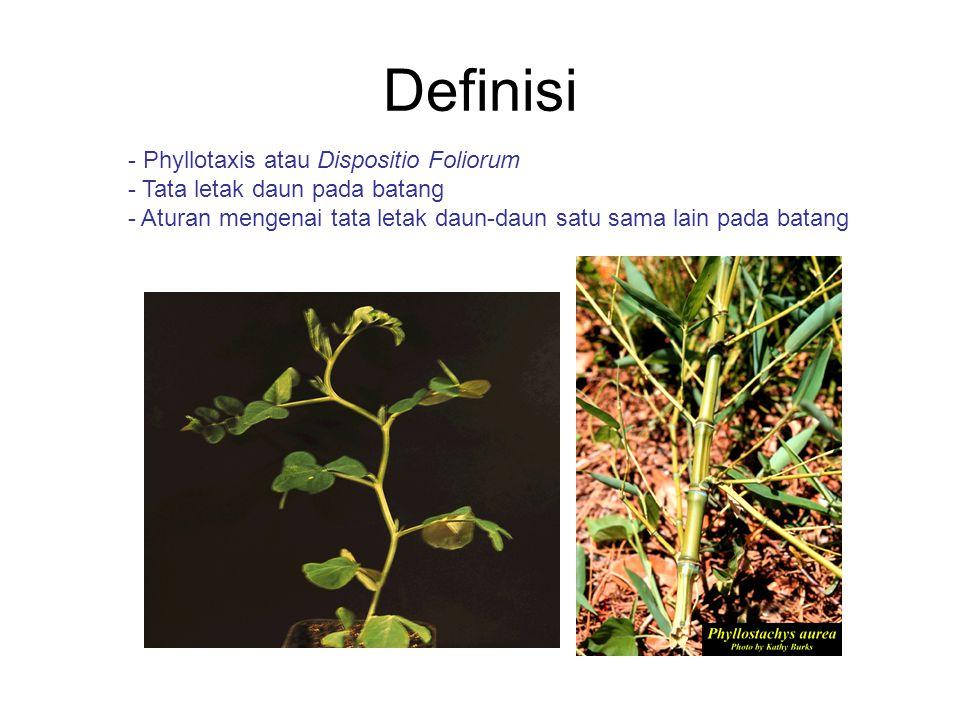 Definisi Phyllotaxis atau Dispositio Foliorum