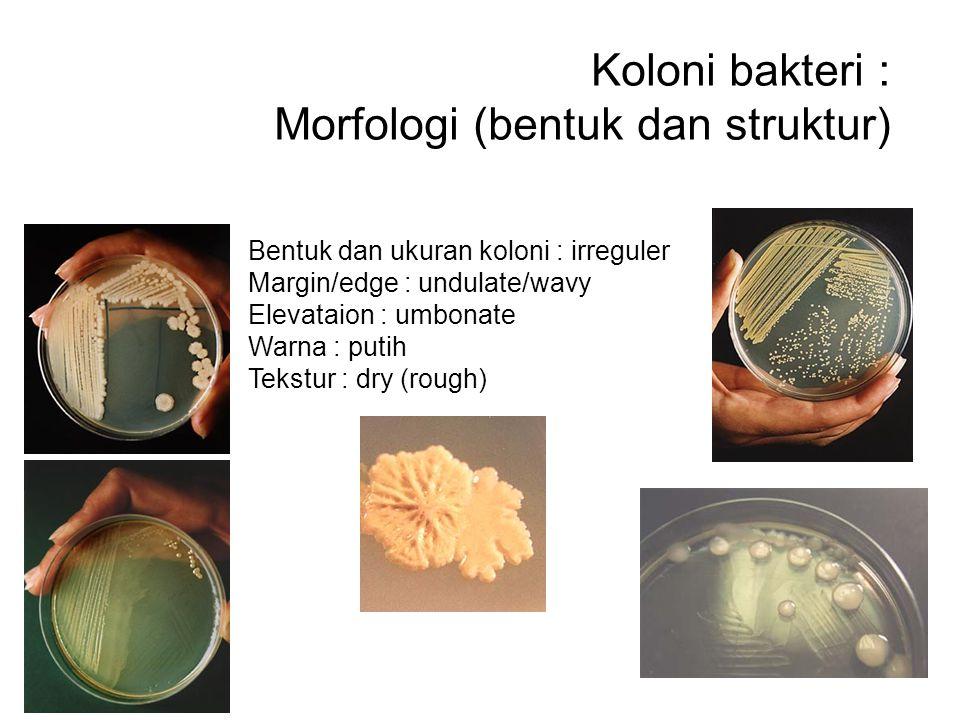 Koloni bakteri : Morfologi (bentuk dan struktur)