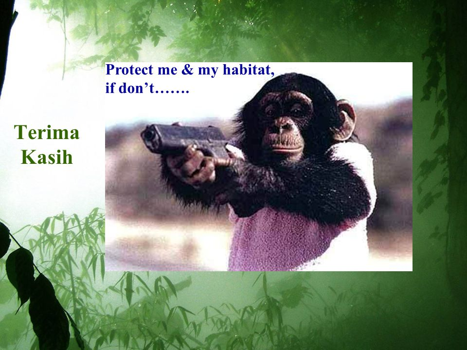 Protect me & my habitat, if don't……. Terima Kasih