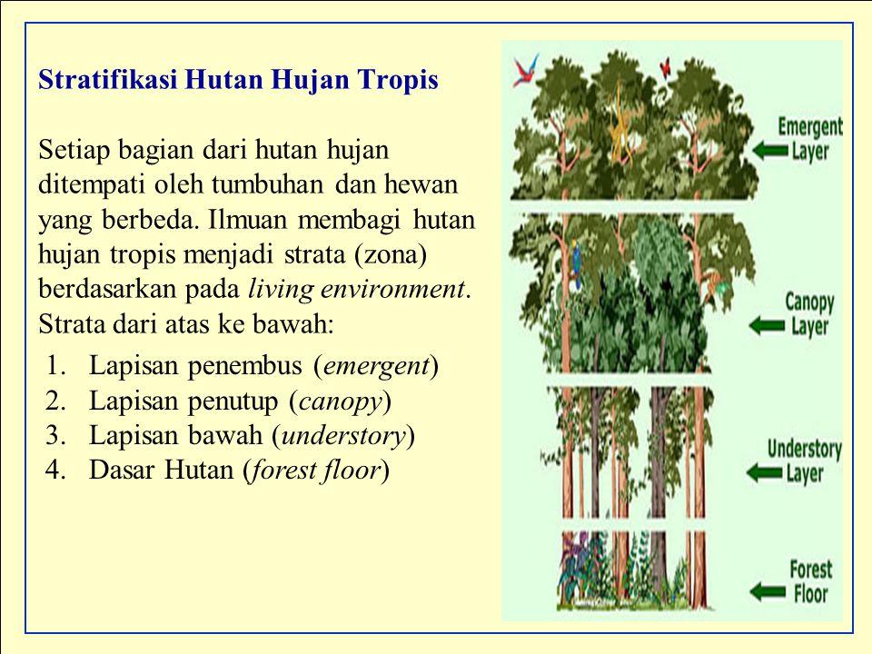 Stratifikasi Hutan Hujan Tropis Setiap bagian dari hutan hujan ditempati oleh tumbuhan dan hewan yang berbeda. Ilmuan membagi hutan hujan tropis menjadi strata (zona) berdasarkan pada living environment. Strata dari atas ke bawah: