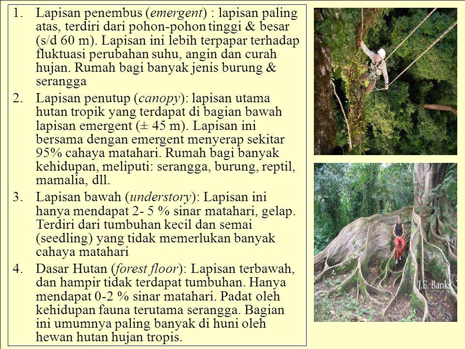 Lapisan penembus (emergent) : lapisan paling atas, terdiri dari pohon-pohon tinggi & besar (s/d 60 m). Lapisan ini lebih terpapar terhadap fluktuasi perubahan suhu, angin dan curah hujan. Rumah bagi banyak jenis burung & serangga