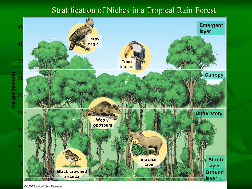 Stratification of Niches in a Tropical Rain Forest