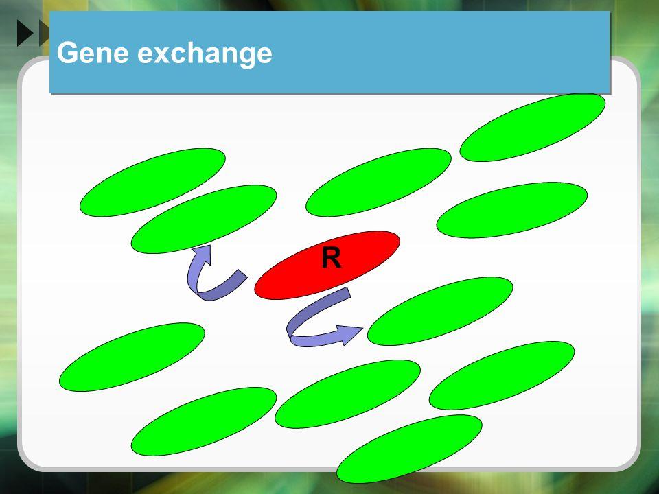 Gene exchange R
