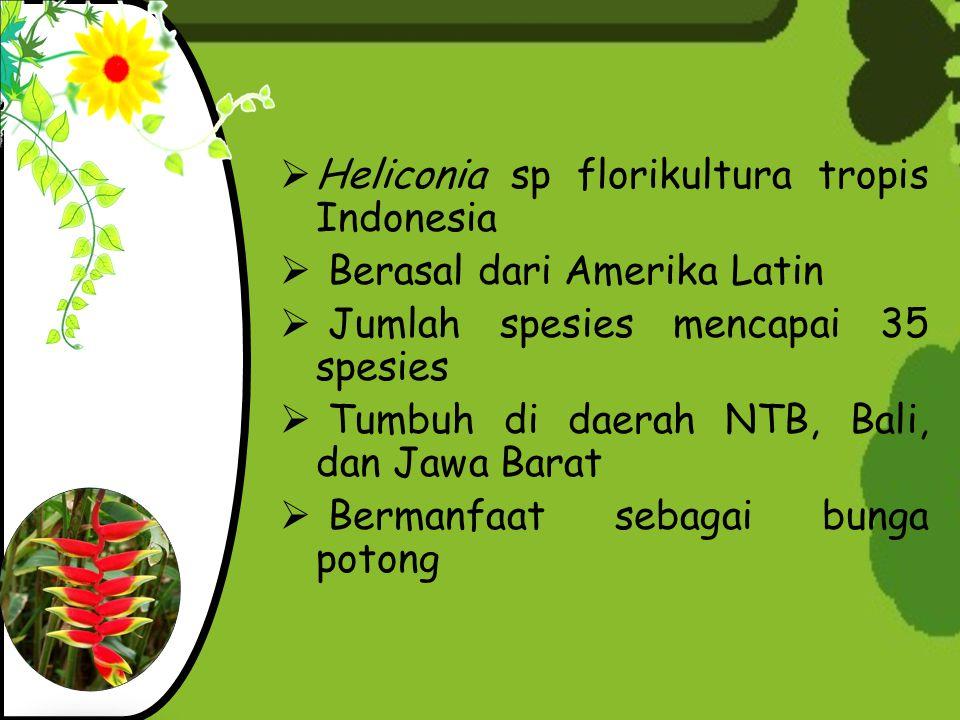 Heliconia sp florikultura tropis Indonesia