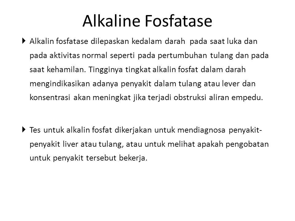 Alkaline Fosfatase