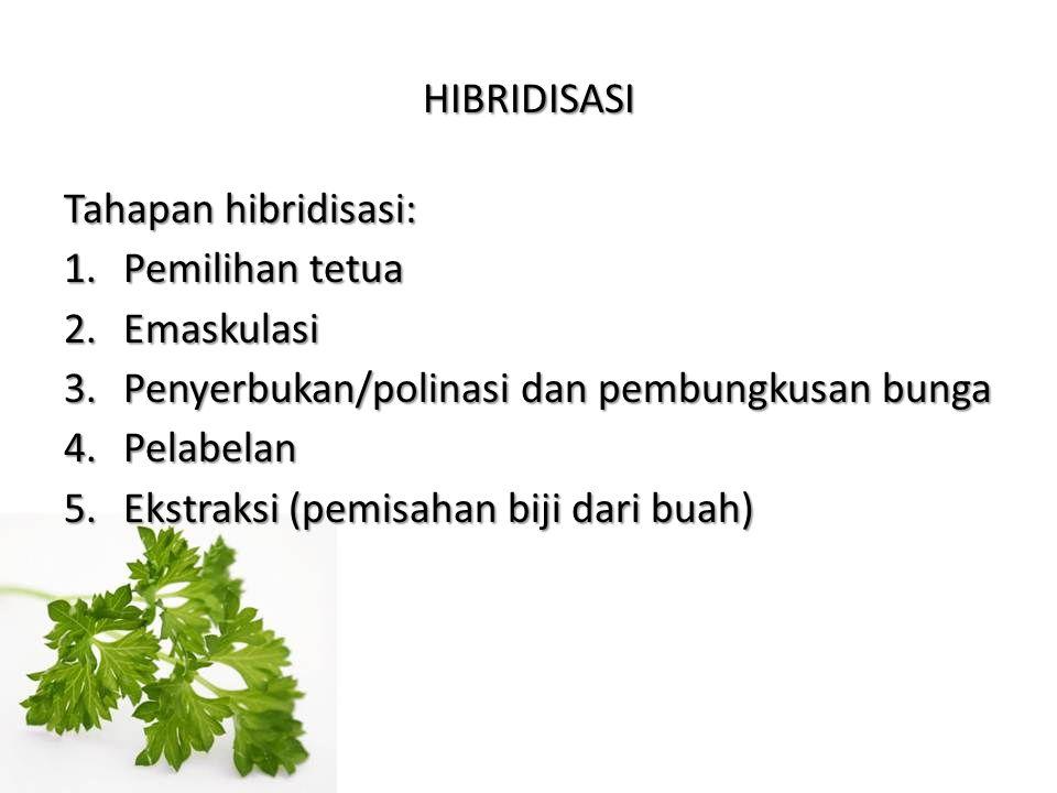 HIBRIDISASI Tahapan hibridisasi: Pemilihan tetua. Emaskulasi. Penyerbukan/polinasi dan pembungkusan bunga.