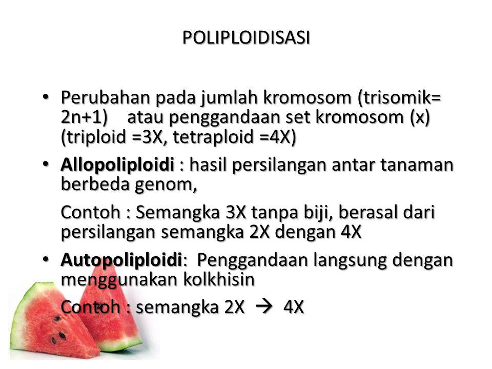 POLIPLOIDISASI Perubahan pada jumlah kromosom (trisomik= 2n+1) atau penggandaan set kromosom (x) (triploid =3X, tetraploid =4X)
