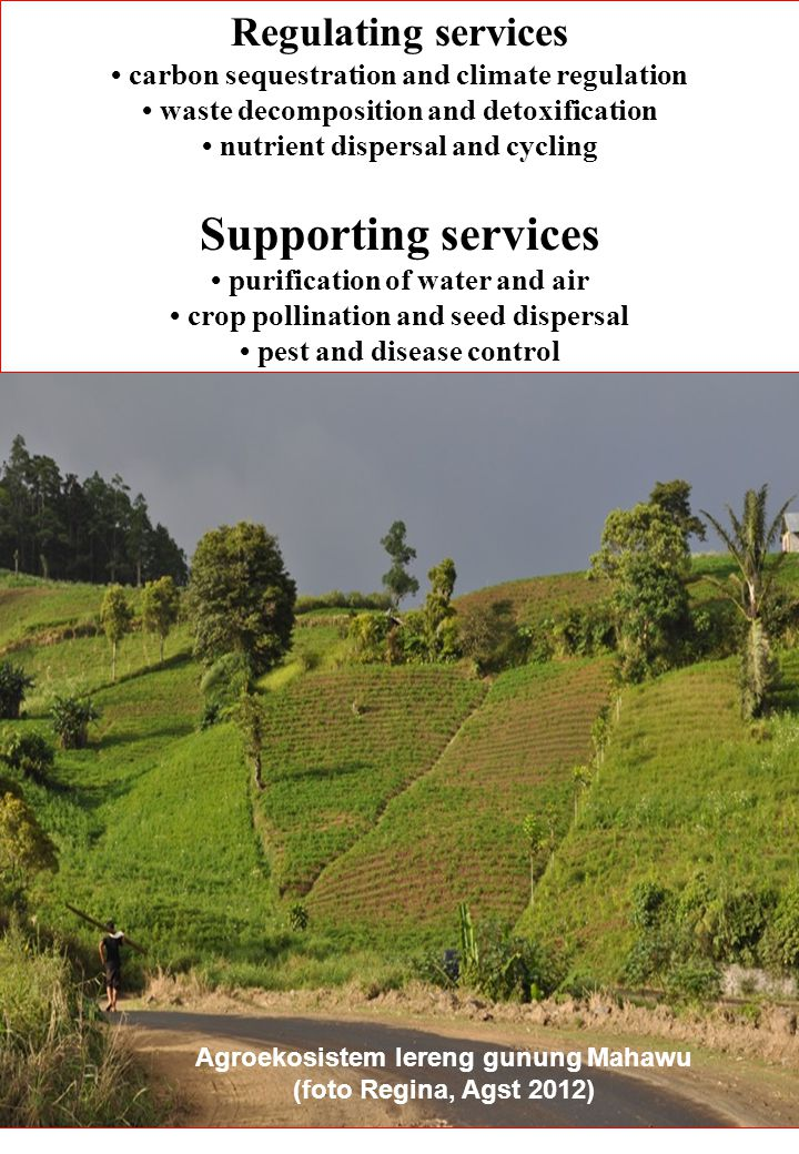 Supporting services Regulating services