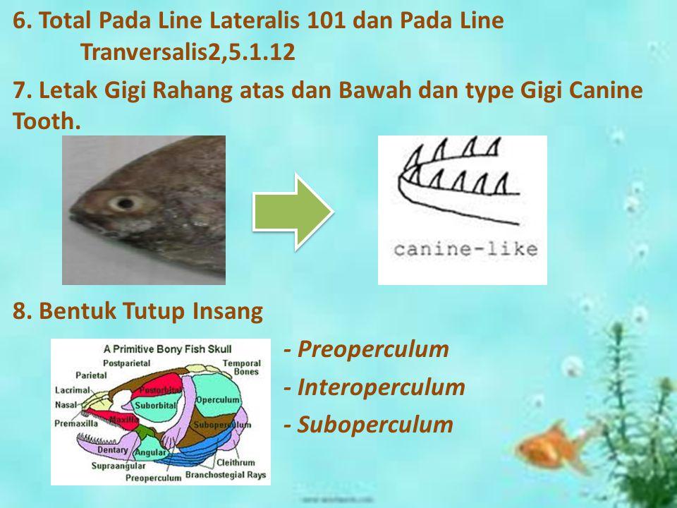 6. Total Pada Line Lateralis 101 dan Pada Line Tranversalis2,5.1.12 7.