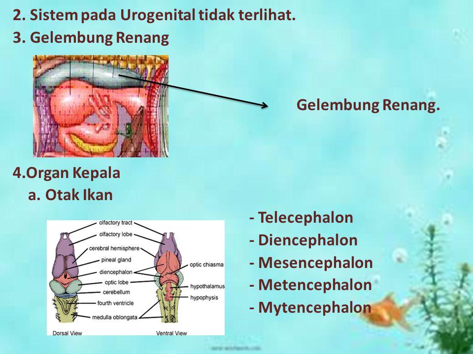 2. Sistem pada Urogenital tidak terlihat. 3
