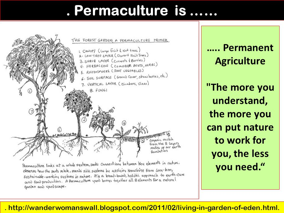….. Permanent Agriculture