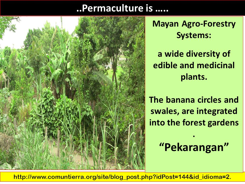 Pekarangan ..Permaculture is ….. Mayan Agro-Forestry Systems: