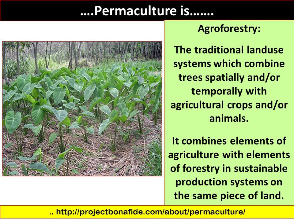 .. http://projectbonafide.com/about/permaculture/