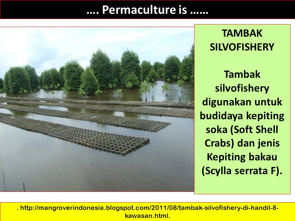 …. Permaculture is …… TAMBAK SILVOFISHERY