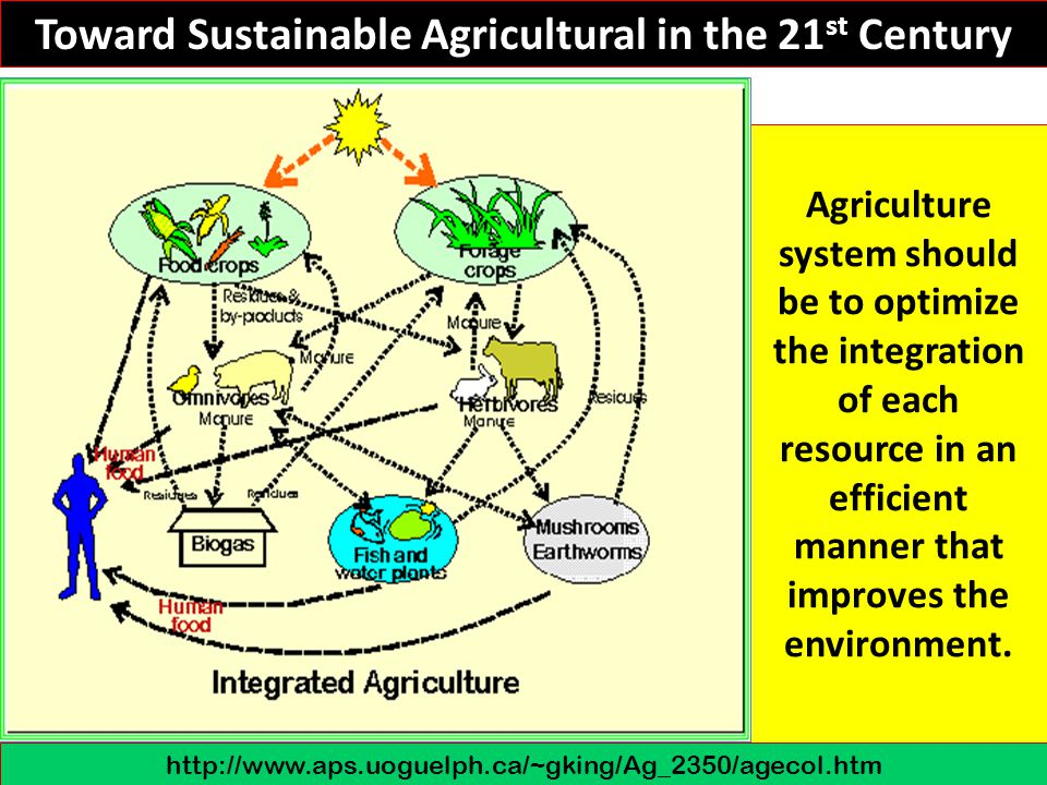 Toward Sustainable Agricultural in the 21st Century