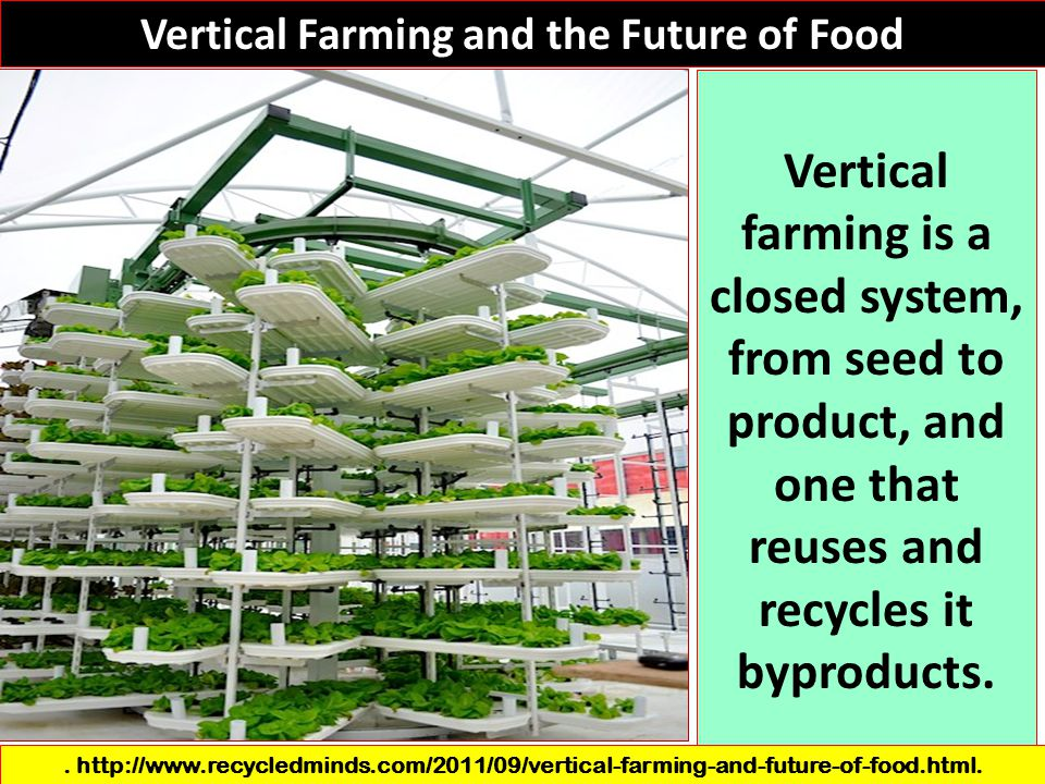 Vertical Farming and the Future of Food