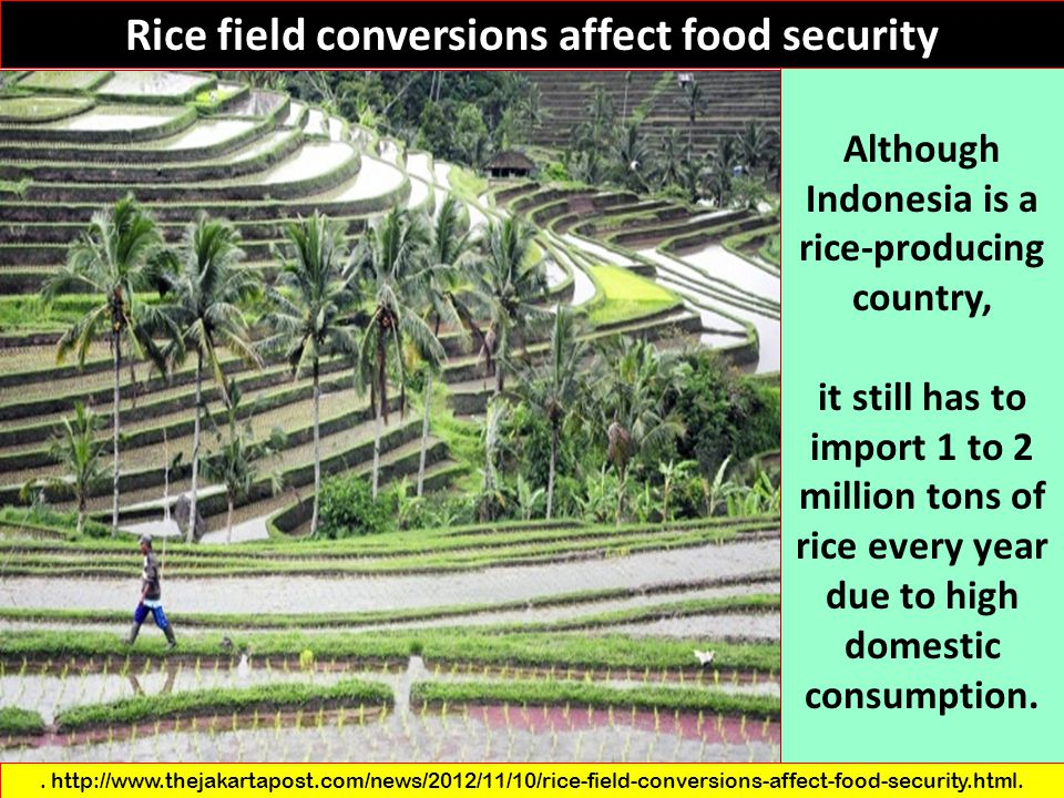 Rice field conversions affect food security