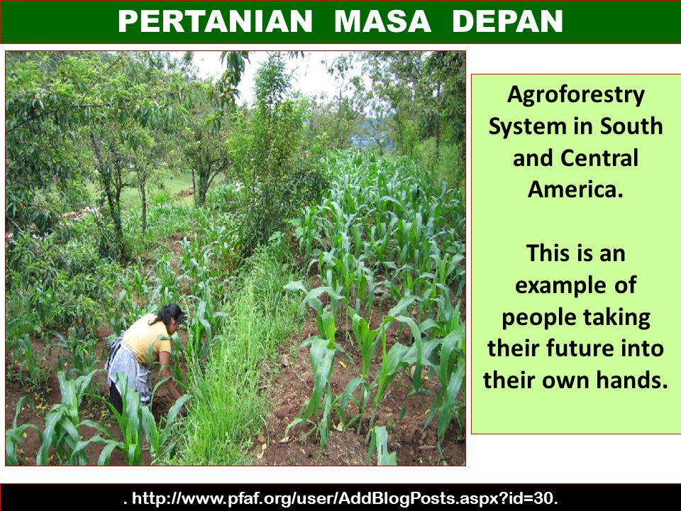 PERTANIAN MASA DEPAN Agroforestry System in South and Central America.