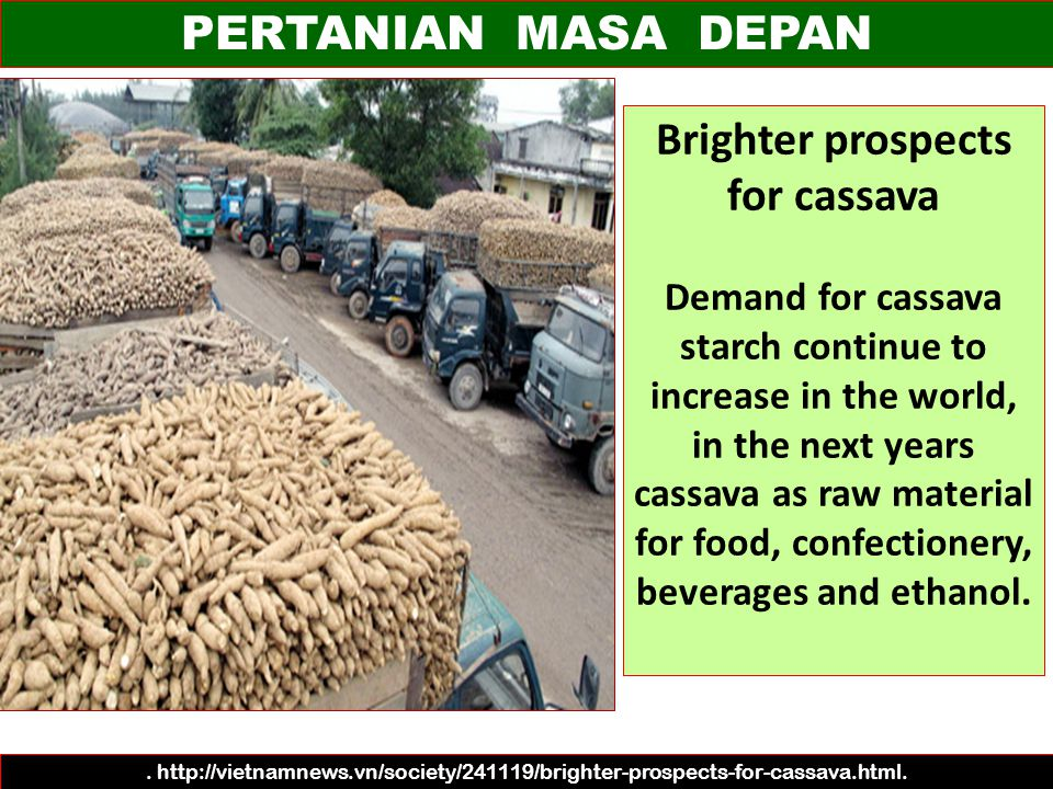 Brighter prospects for cassava
