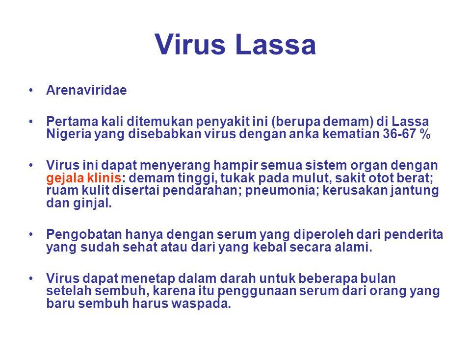 Virus Lassa Arenaviridae
