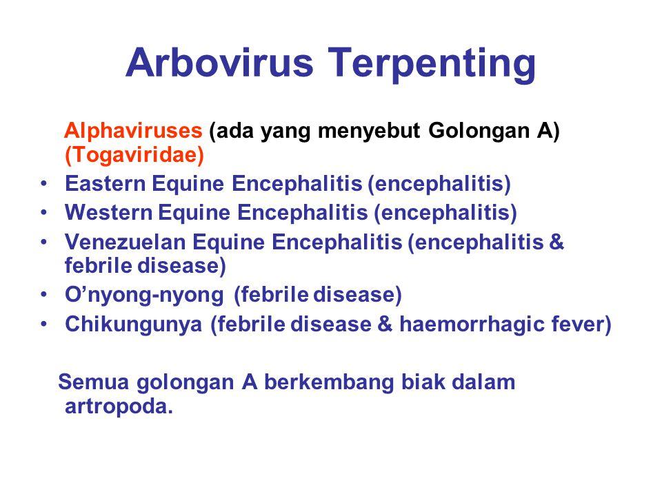 Arbovirus Terpenting Alphaviruses (ada yang menyebut Golongan A) (Togaviridae) Eastern Equine Encephalitis (encephalitis)