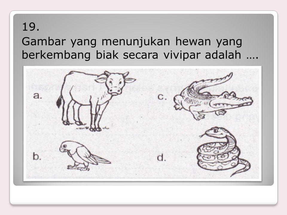 19. Gambar yang menunjukan hewan yang berkembang biak secara vivipar adalah ….