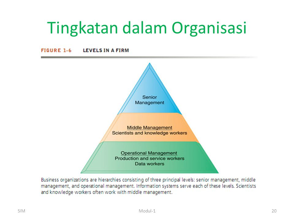 Tingkatan dalam Organisasi