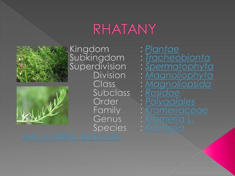 RHATANY Kingdom : Plantae Subkingdom : Tracheobionta