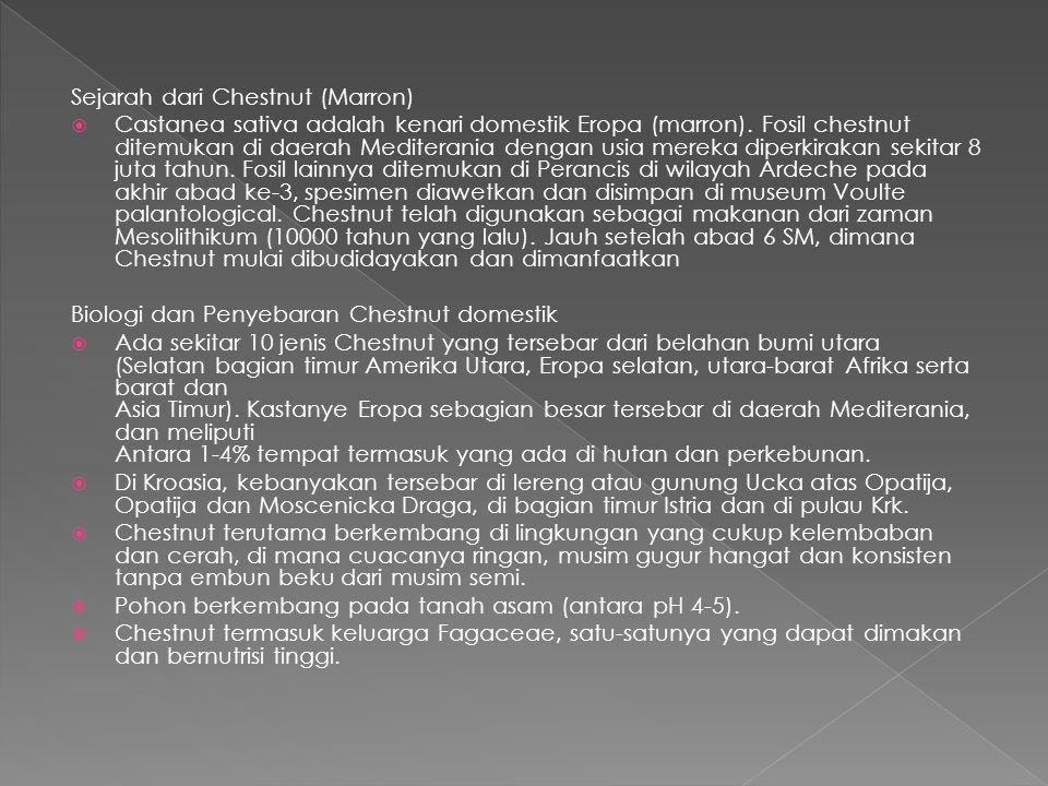 Sejarah dari Chestnut (Marron)