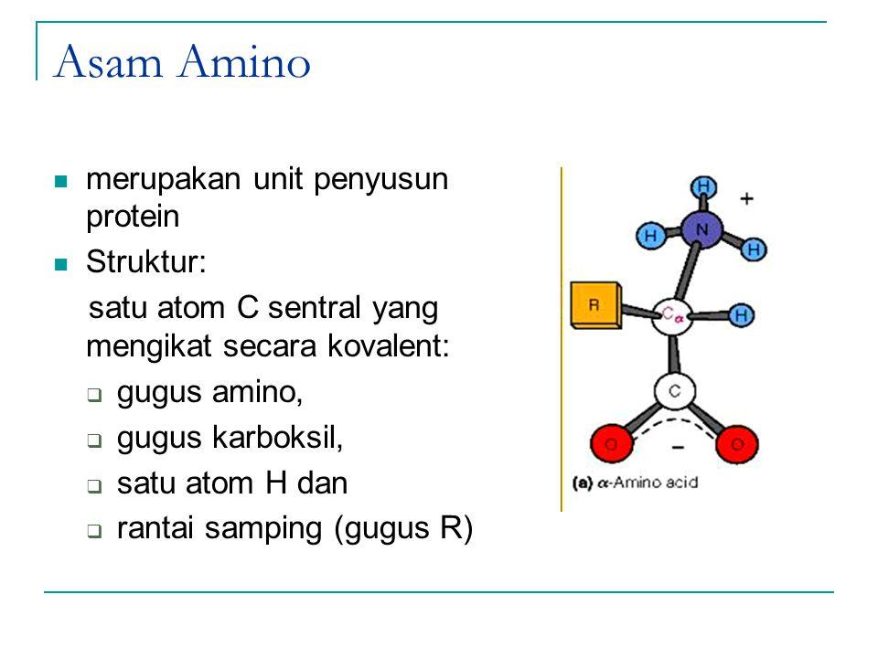 Asam Amino merupakan unit penyusun protein Struktur: