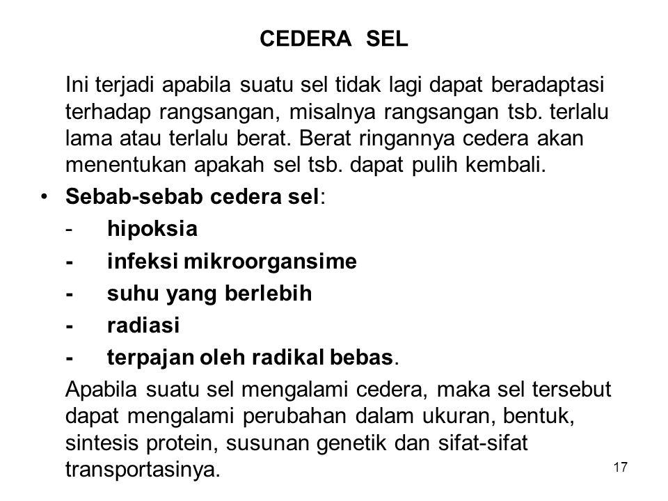 CEDERA SEL